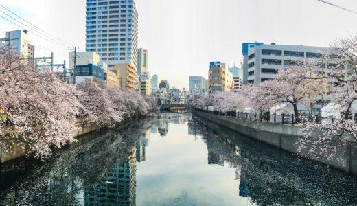 【野毛桜】花見をしながら飲めるお店特集